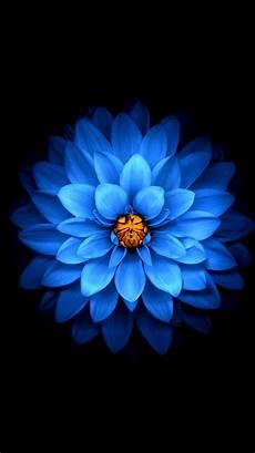 iphone 7 flower wallpaper 4k wallpaper blue flower up black background 3840x2160