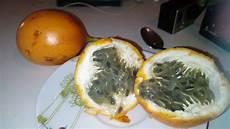 la jaune la grenadille jaune le fruit le plus d 233 licieux au monde