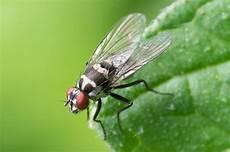was hilft gegen fliegen ursachen hausmittel und tipps