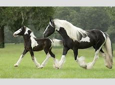 Tinker Mare And Foal Wallpaper Widescreen Hd