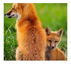 tierwelt haustiere hunde katzen freshideen 1