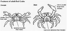 Mengenal Kepiting Dan Anatominya Aanblog
