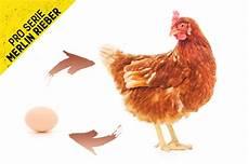 was war zuerst da das huhn oder das ei let s bands fehlerhafte bewegungsmuster was war zuerst da das huhn oder das ei