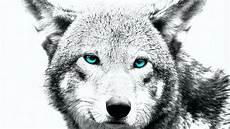 Wolf Wallpaper Sketch