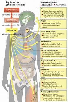 schilddrüse symptome test schilddr 252 senunterfunktion symptome und behandlung