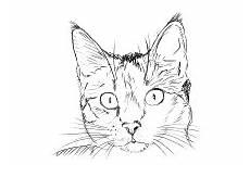 Malvorlage Katzenkopf Einfach Malvorlagen Katzen