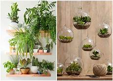 Pflanzen Zu Hause - decorate your home with indoor plants 5 easy home decor
