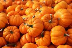 28 different types of pumpkin