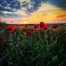 paesaggi fioriti paesaggio con prati fioriti in estate dobrogea romania