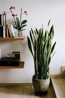 107 Best Plantes D 233 Polluantes Images On