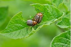 how to avoid pests and diseases in the garden hgtv