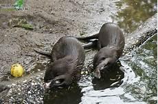 zwergotter zoo duisburg freizeitpark welt de
