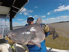 10 Biggest Catfish World Records Of All Time  Game & Fish