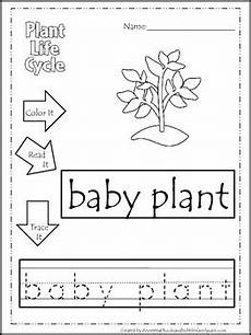 science tracing worksheets 12416 science cycle of a plant color read trace preschool homeschool worksheets