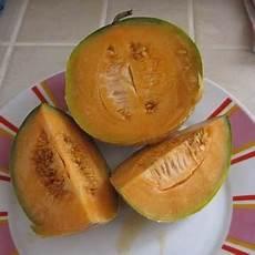 quand cueillir les melons quand cueillir les melons cantaloup
