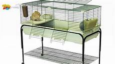Quelle Cage Pour Cochon D Inde Choisir