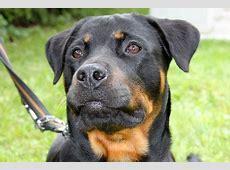 Kampfhunde/Listenhunde nach der Bayerischen