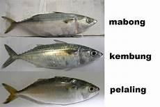 Panduan Mengenali Ikan Yang Selalu Dijual Di Pasar