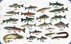 fischarten liste mit bildern fischarten
