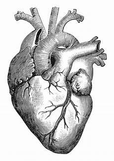 Malvorlage Herz Malvorlage Herz Ausmalbild 27911