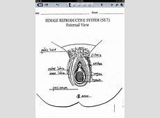 diagram of female organs