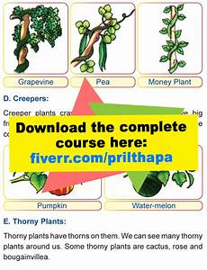 kinds of plants worksheets for grade 1 13700 grade 1 science lesson 2 the plant kingdom primary science
