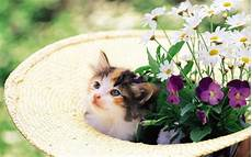 die katzen vom garten fernhalten information mittel und