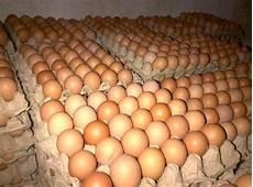 Harga Telur Ayam Terbaru Agustus 2019 Update