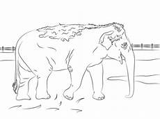 indian elephant coloring page free printable