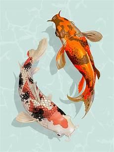 Dessin Poisson Japonais Two Japanese Koi Fish Swimming Free Vectors