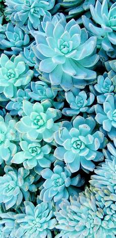 blue green flower wallpaper iphone succulent wallpaper w a l l p a p e r s hintergr 252 nde