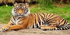 Sebutkan Ciri Ciri Fauna Asiatis Biologi Usaha321 Net