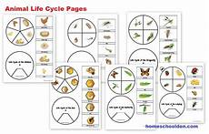 animal cycle worksheets 13938 animal unit vertebrate invertebrate animals worksheet packet 100 pages homeschool den