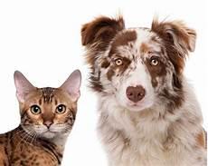 chiens et chats 224 gratter la fran 231 aise des jeux recrute
