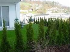 Lebensbaum Orientalischer Lebensbaum Smaragd 5 Stk H