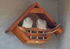 mourning dove house plans great dove bird house bird house plans bird house kits