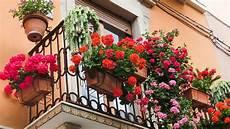 Balcon Quelles Plantes Choisir Pour Le D 233 Corer Vid 233 O