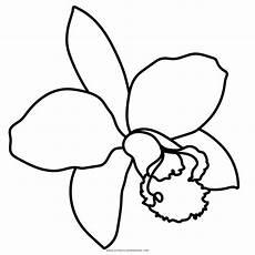 orquidea nacional para colorear dibujo de orqu 237 dea para colorear ultra coloring pages
