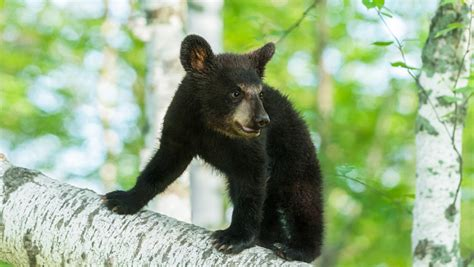 Great Smoky Mountains National Park Asks Visitors To Adopt