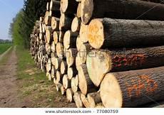 Dak Kerusakan Hutan Dan Upaya Pelestariannya