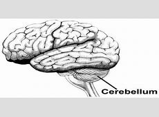 define cerebellum