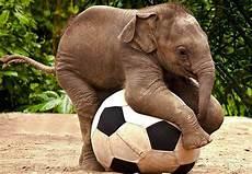 Gambar Gajah Lucu Banget Menggemaskan Imut Gambarcoloring