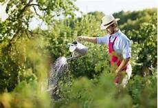du fumier pour am 233 liorer votre jardin potager