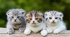 10 Foto Anak Kucing Lucu Dan Imut Imut Kucing Co Id