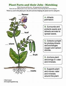 plants worksheets for primary 13486 learn about plants and the ngss on exploringnature org parts of a plant teaching plants plants