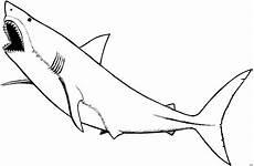 Malvorlagen Hai Gratis Ausmalbilder Haie Free Ausmalbilder
