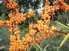 arbuste fruit images gratuites fruit fleur m 251 r orange aliments