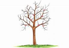 trompetenbaum schneiden 187 tutorial mit anleitungen und bildern