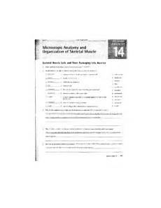 review sheet 14 15 skeletal muscle cells and their