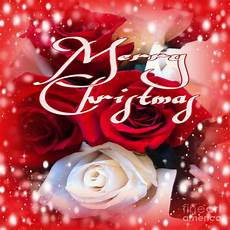 merry christmas roses photograph by gayle price